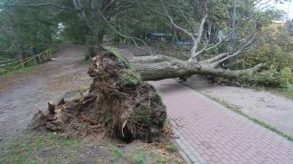 Ostrzeżenie IMGW – silny wiatr