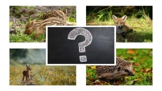 Postępowanie w momencie znalezienia dzikiego zwierzęcia lub ptaka